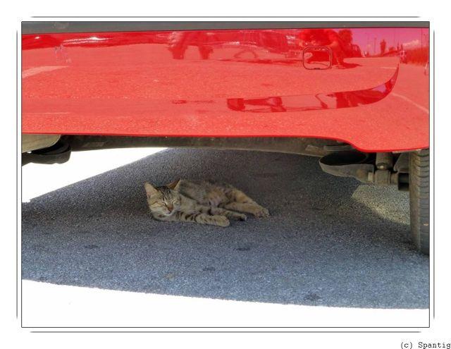 Schattiges Plätzchen unter unserem Auto